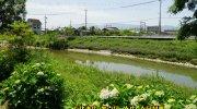 kaihousoukokashiharaten201805-029